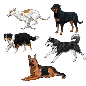 how to draw dogs