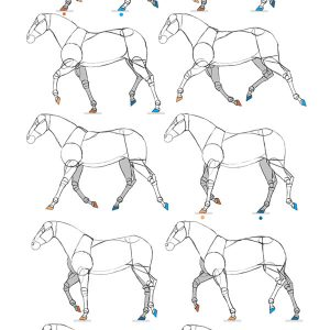 how to animate horse gaits