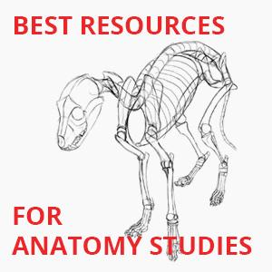 best resources for anatomy studies