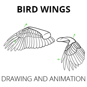 how to draw and animate bird wings