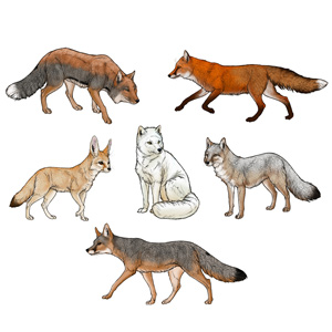 how to draw foxes