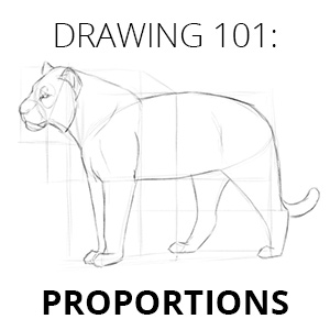 how to draw proportions