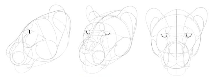 To a draw head cat How To