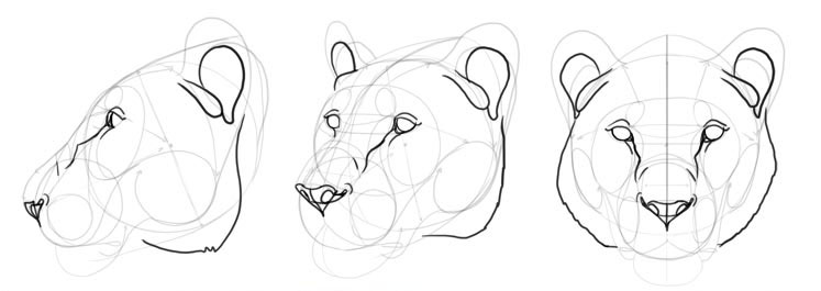 How To Draw A Big Cat Head