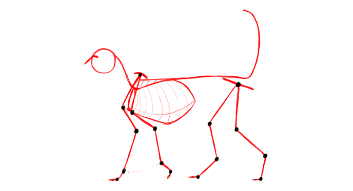 cat anatomy how to draw the skeleton