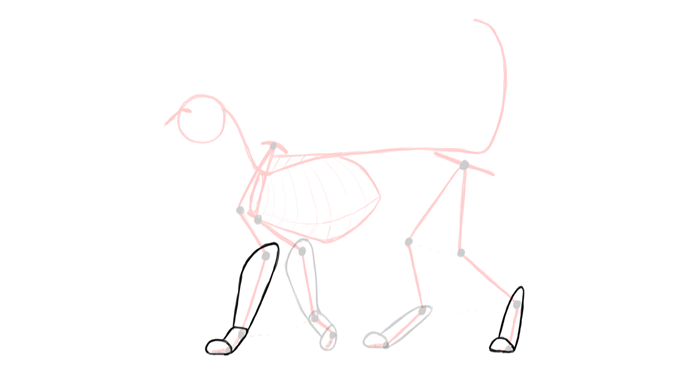 draw-cats-anatomy-2
