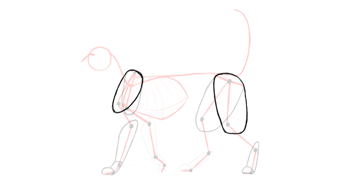 draw-cats-anatomy-3