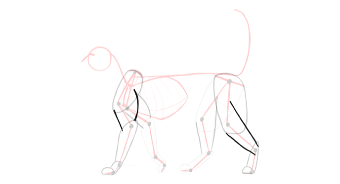 draw-cats-anatomy-4