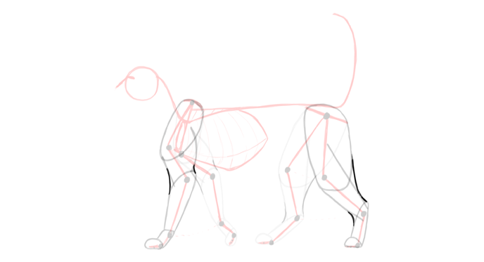 draw-cats-anatomy-5