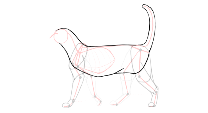 draw-cats-anatomy-6