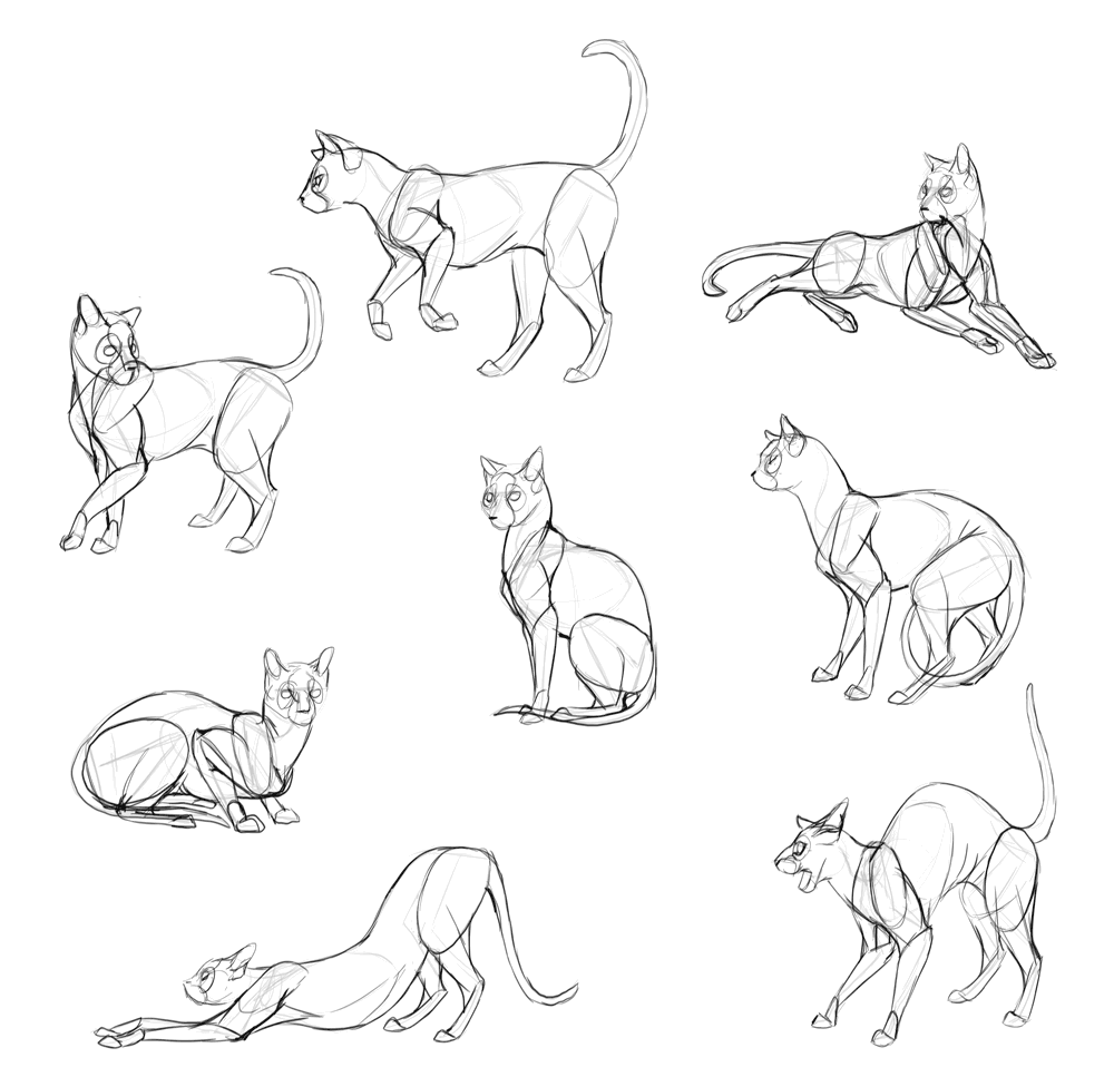 Sketchbook Original How To Draw Cats Monika Zagrobelna