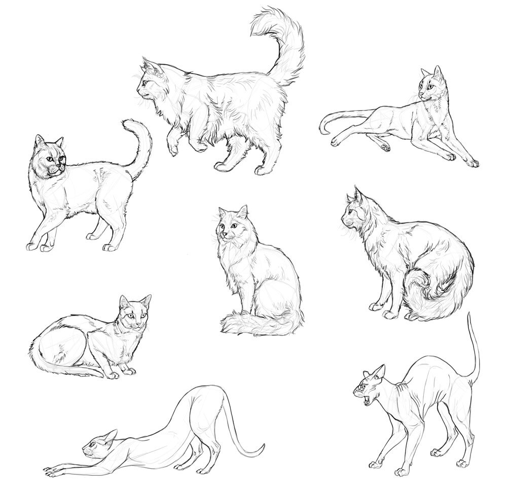 draw-cats-done-4