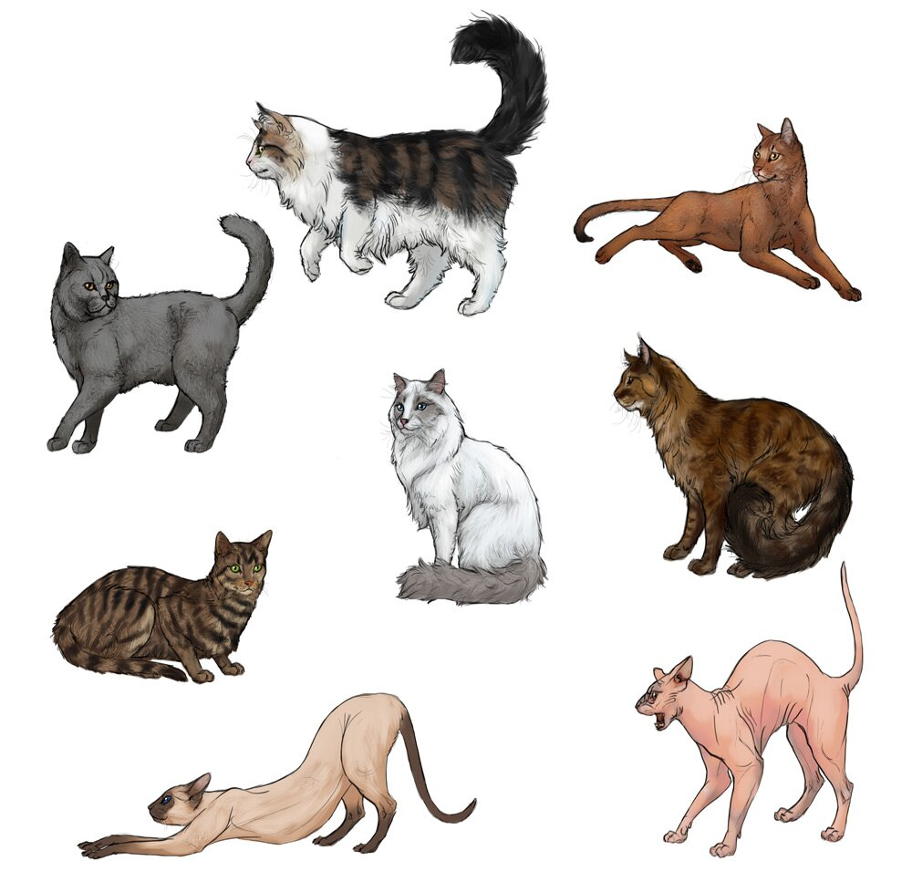 how to draw cats step by step