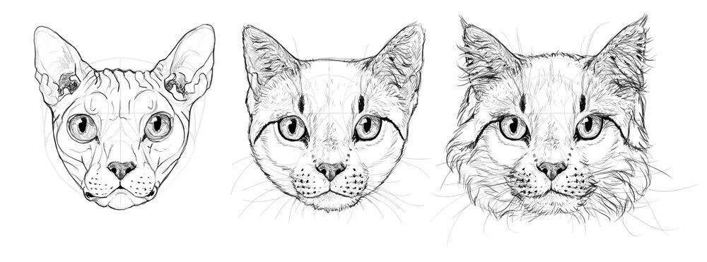 how to draw a cat head step by step