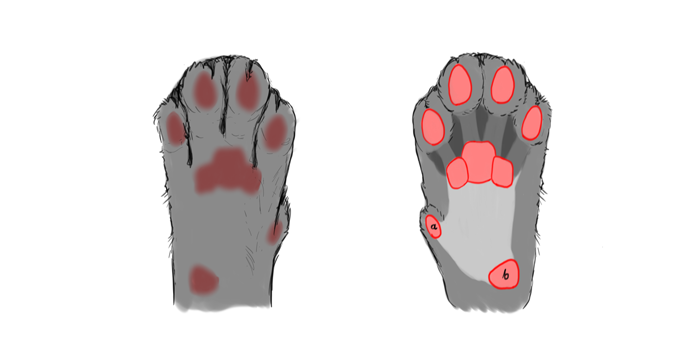draw-cats-paws-0