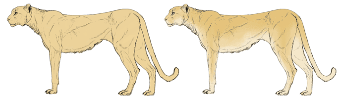 how-to-draw-big-cats-colors-cheetah-2