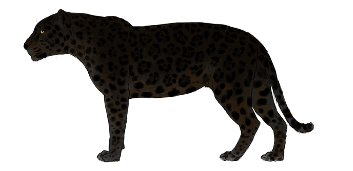 how-to-draw-big-cats-colors-jaguar-7