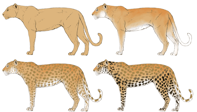 how-to-draw-big-cats-colors-leopard-2