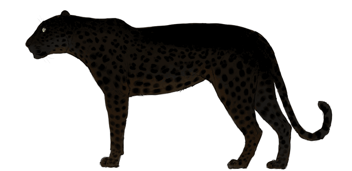 how-to-draw-big-cats-colors-leopard-7