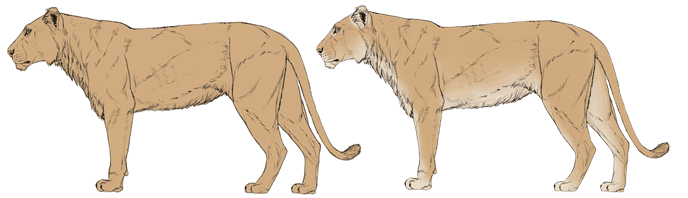 how-to-draw-big-cats-colors-lion-2
