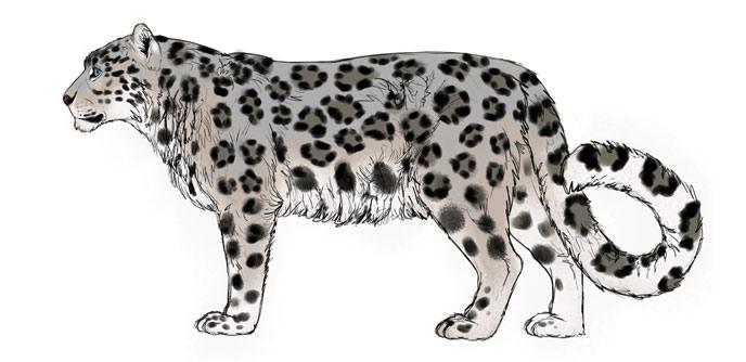 Это изображение имеет пустой атрибут alt; его имя файла - how-to-draw-big-cats-colors-snow-leopard-6.jpg
