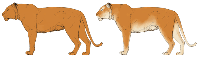how-to-draw-big-cats-colors-tiger-2