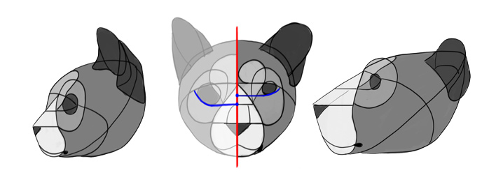 how-to-draw-big-cats-head