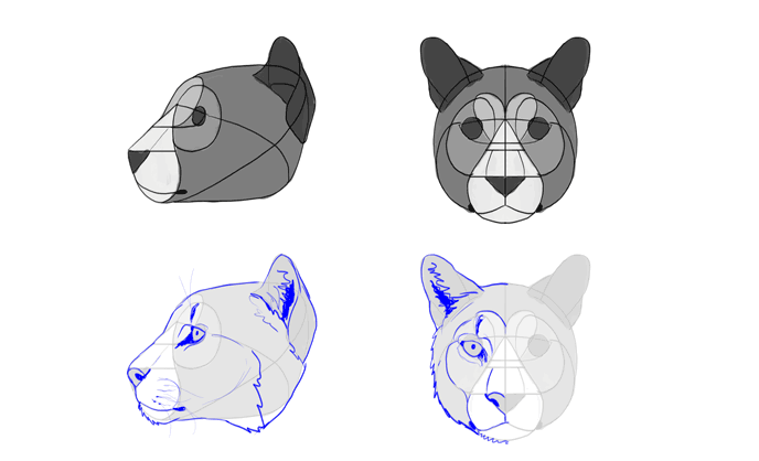 how to draw mountain lion head