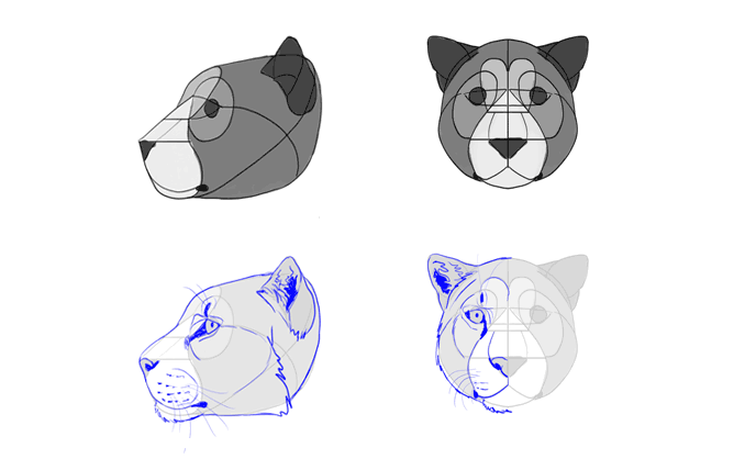 how-to-draw-big-cats-heads-jaguar