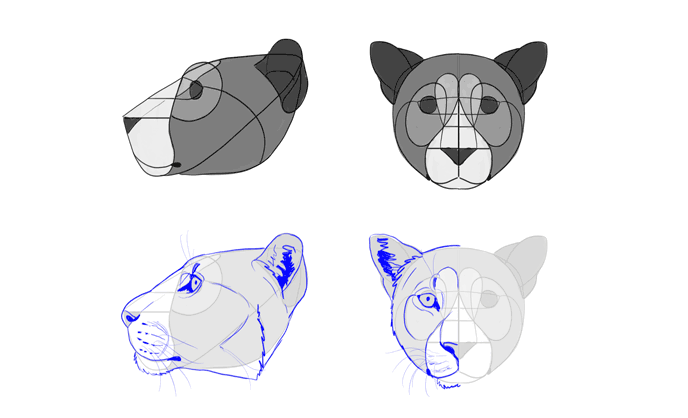 how-to-draw-big-cats-heads-leopard