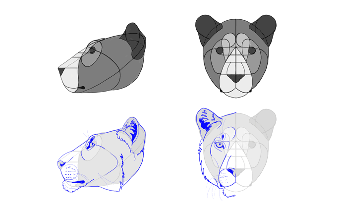 how-to-draw-big-cats-heads-lion