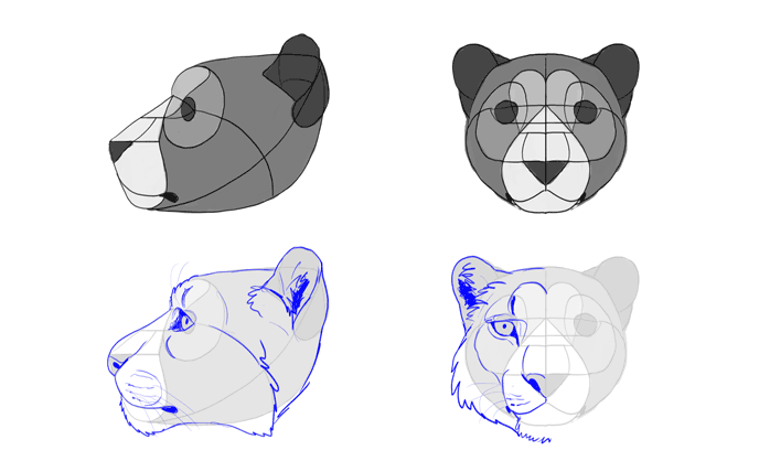 how-to-draw-big-cats-heads-snow-leopard
