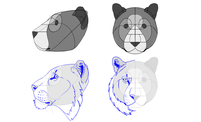 how-to-draw-big-cats-heads-tiger