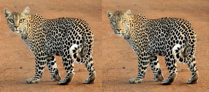 Это изображение имеет пустой атрибут alt; его имя файла - how-to-draw-big-cats-manipulation.jpg