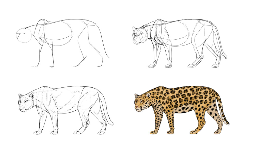 how-to-draw-big-cats-process-jaguar