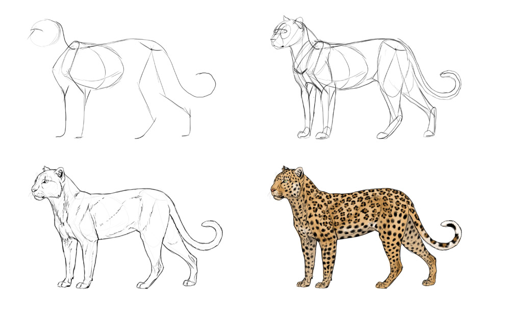 how-to-draw-big-cats-process-leopard