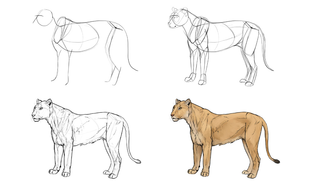 how-to-draw-big-cats-process-lion