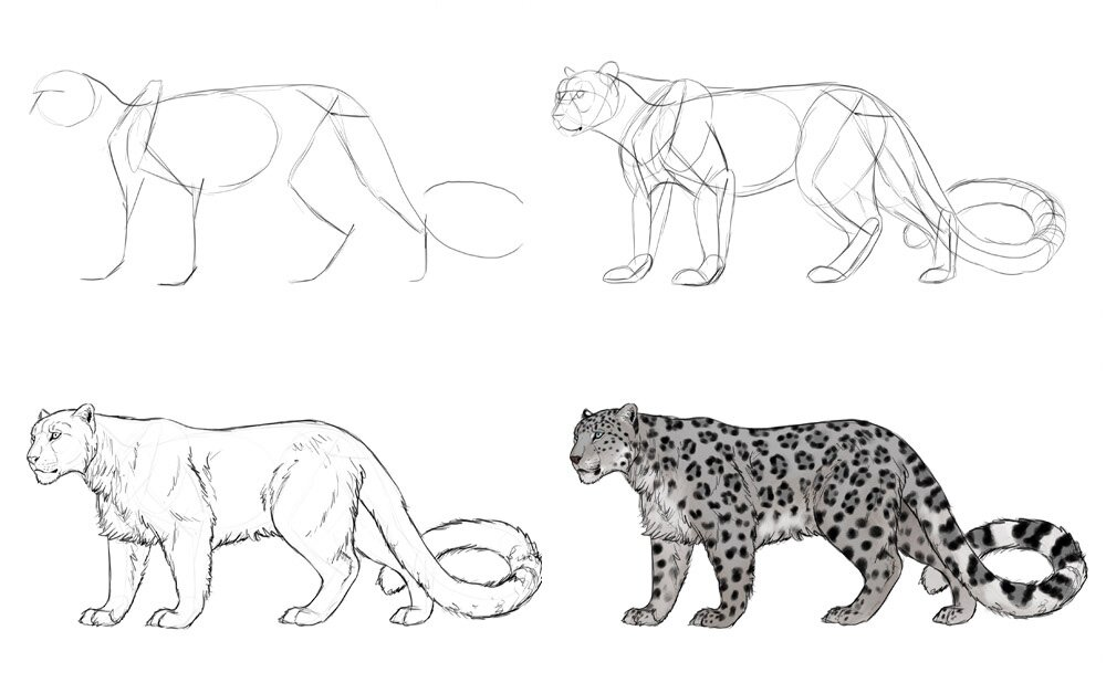 how-to-draw-big-cats-process-snow-leopard