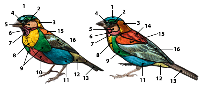 how-to-draw-birds-feathers-diagram