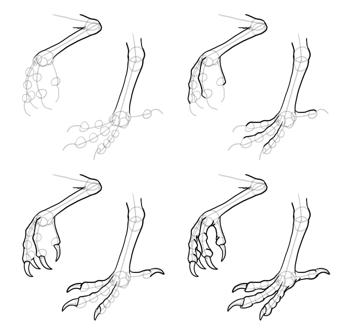 how-to-draw-birds-feet-7