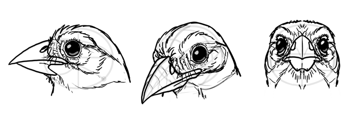 how-to-draw-birds-head-10