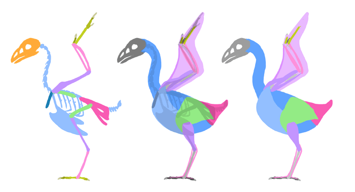 how-to-draw-birds-muscles