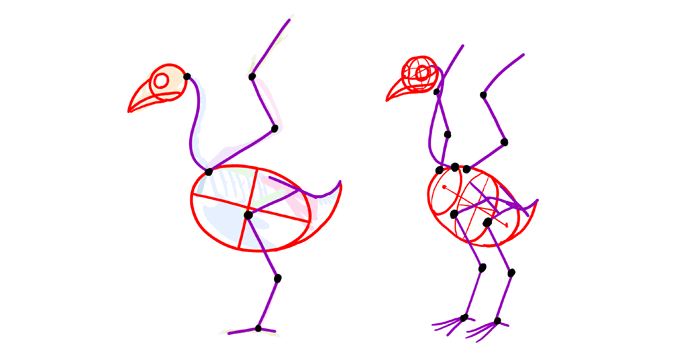 how-to-draw-birds-skeleton-simplified