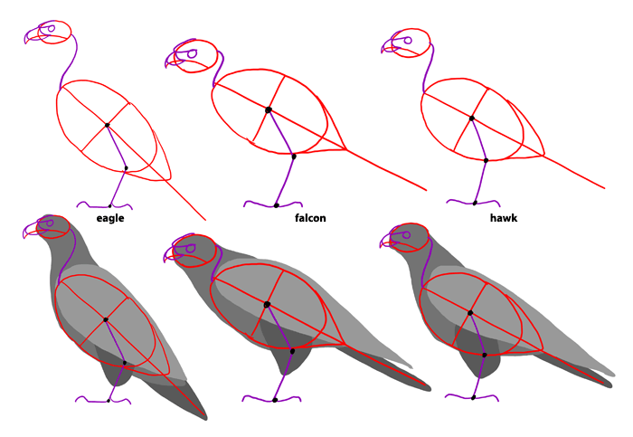 how-to-draw-birds-species-birdsofprey