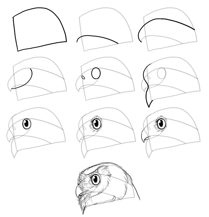 how-to-draw-birds-species-head-owls