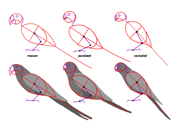 how-to-draw-birds-species-parrots
