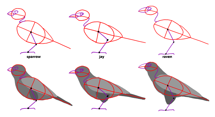 how-to-draw-birds-species-passerines