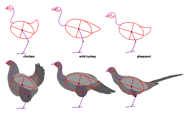 how-to-draw-birds-species-perching