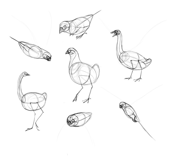 how-to-draw-birds-step-by-step-11