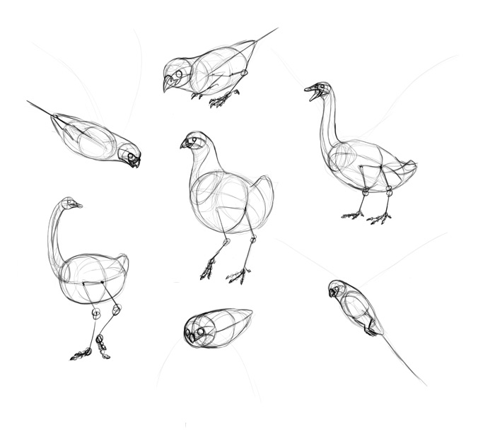 how-to-draw-birds-step-by-step-12